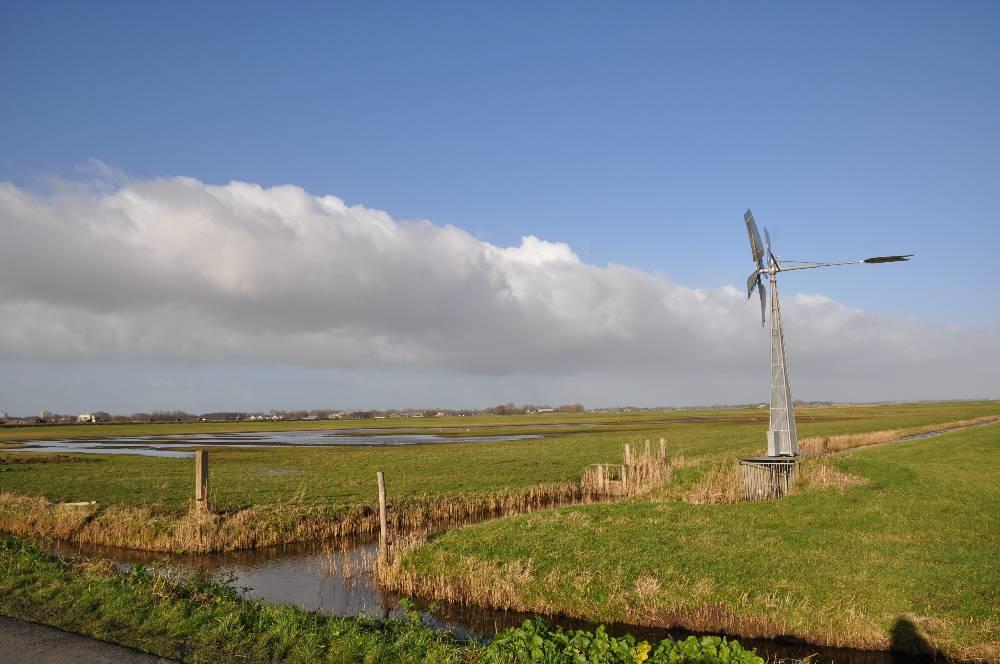 Plasdras in de weilanden van Landschap Noord-Holland aan de oostkant van de Uitgeesterweg tussen Uitgeest en Limmen
