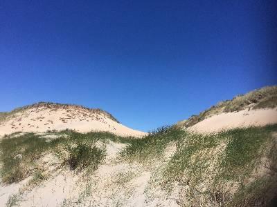 Jonge duinen bij Castricum