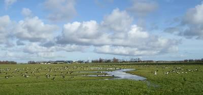 Meanderende greppel in Buitendijks Weid