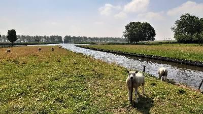 Elke boerderij aan de Westergeest op de strandwal van Uitgeest heeft zijn eigen 'notsloot' naar het Binnenmeer. Vandaar kon over het water de weilanden in de Uitgeesterbroekpolder worden bereikt.
