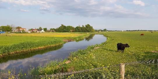 Foto: Schulpvaart bij Limmen - Lia Vriend